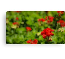 Flowers at Epcot Canvas Print