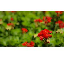 Flowers at Epcot Photographic Print