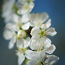 Plum tree blossom in blue by Lissywitch