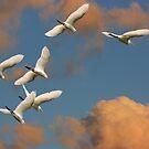 Winging It! by byronbackyard