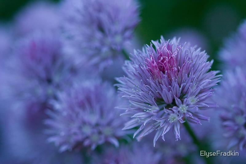 Blush Brush by ElyseFradkin