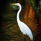 Egret on Mexican Vacation by Xcarguy