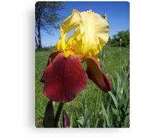 Love the Iris .... Canvas Print