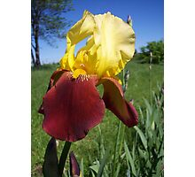 Love the Iris .... Photographic Print