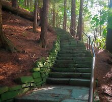 Forest Stairway at Toughannock Falls by David Lamb