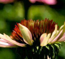 Echinacea - Fletcher's Garden Sticker