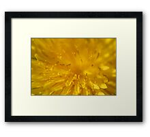 Yellow dandelion flower macro  Framed Print