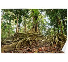 Tropical tree roots in the jungle of Costa Rica Poster