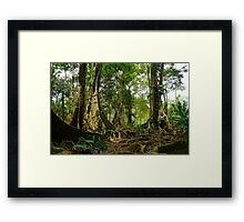 Tropical trees and roots in the jungle Framed Print