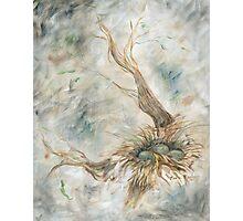Bird's Nest in Gray Photographic Print
