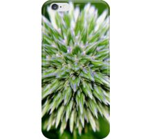 Globe Thistle (Echinops) Seed head iPhone Case/Skin