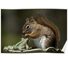Staged Red Squirrel Poster