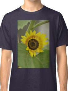 Sunflower - macro Classic T-Shirt