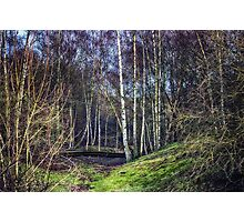 Woodland Spaces Photographic Print