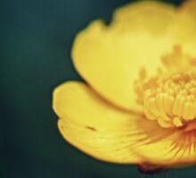 Buttercup flower  Sticker