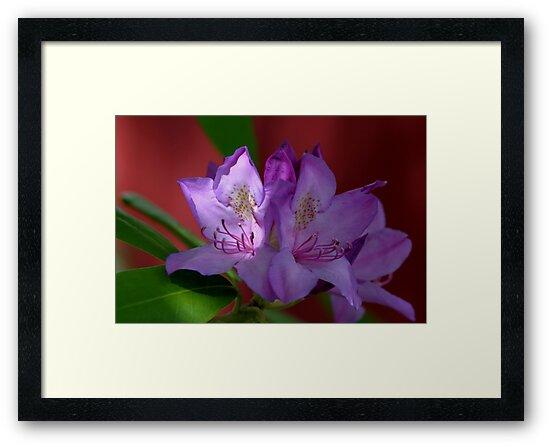 Azalea In A Sunshine Spotlight by Gene Walls
