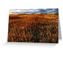Fall Field Greeting Card