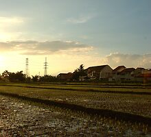rice paddies by bayu harsa