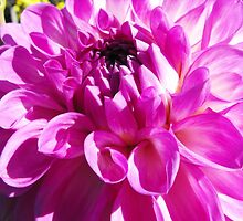Dahlia with Orton Effect by Matthew Sims