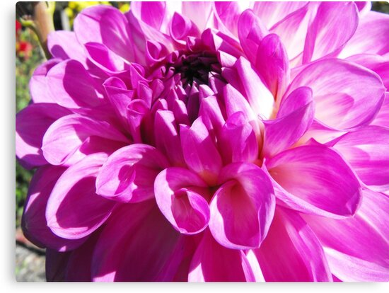 Dahlia with Orton Effect by Matthew Walmsley-Sims