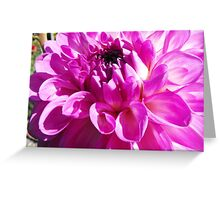 Dahlia with Orton Effect Greeting Card