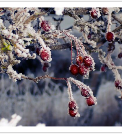 Frosted Berries Sticker