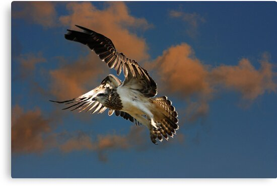 Flying Blind by byronbackyard