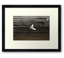 House Fly Framed Print