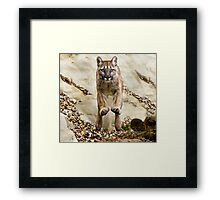 She flies through the air with the greatest of ease...... Framed Print