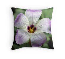 Rock Oxalis in my Peebles garden Throw Pillow