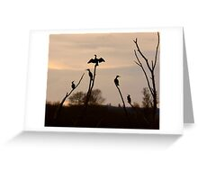 Cormorants roost Greeting Card