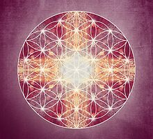 flower of life magenta by filippobassano