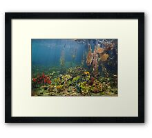 Colorful underwater marine life in the mangrove Framed Print