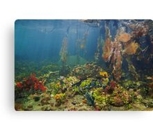 Colorful underwater marine life in the mangrove Canvas Print