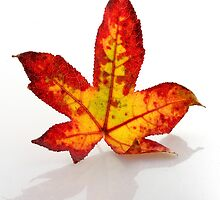 Autumn Leaf by MJVincent