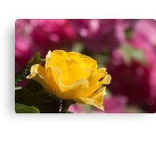 Yellow Rose Of Toronto Canvas Print