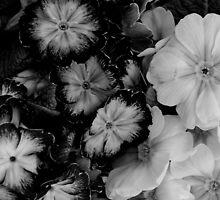flowers by bonrossi
