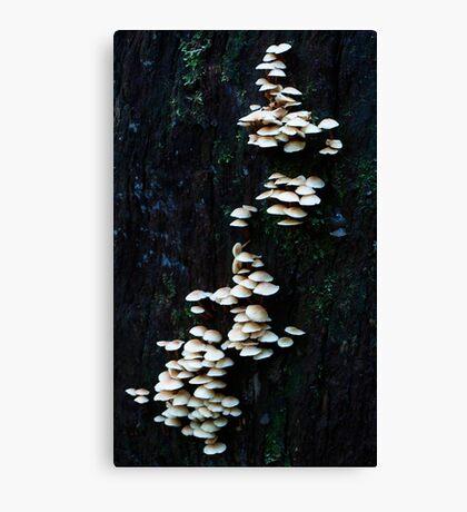 Layer Upon Layer- Fungi Canvas Print