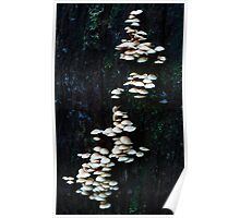 Layer Upon Layer- Fungi Poster
