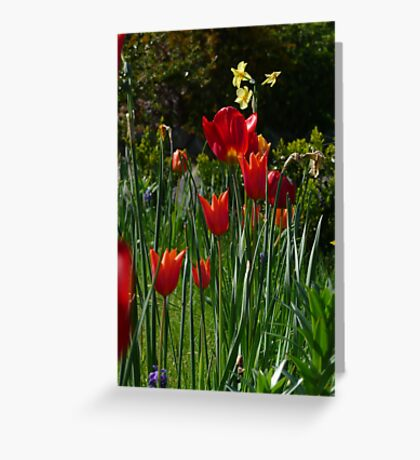 Low Tulip Greeting Card