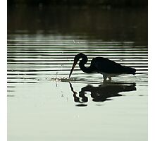 spear fishin' heron Photographic Print
