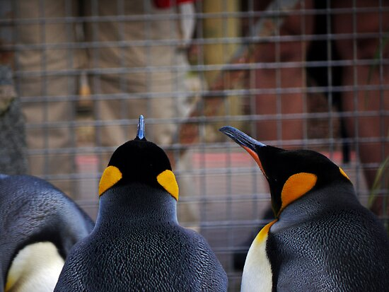 Role Reversal: Penguins at the Human Enclosure by Ryan Davison Crisp