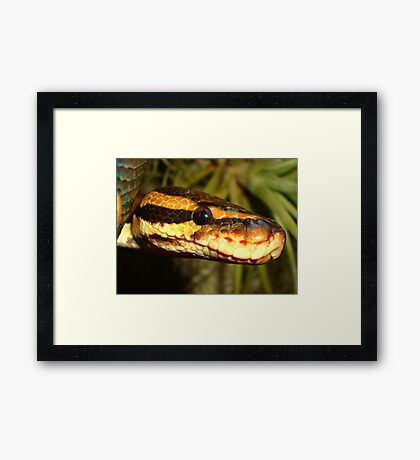 Reptile Royalty Framed Print