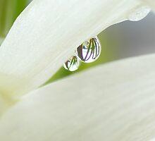 Spring rain reflections by walstraasart