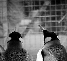 Penguins Day Out by Ryan Davison Crisp