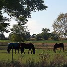 Country Living by kkphoto1