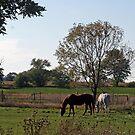 Down On The Farm by kkphoto1