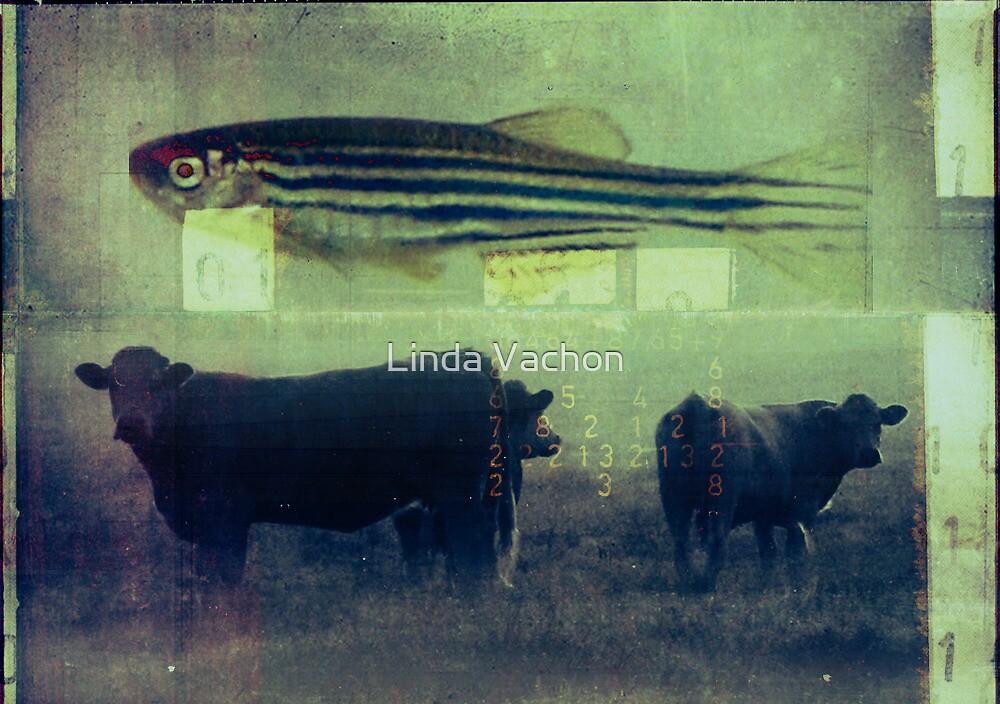 carte postale / 039 by linda vachon