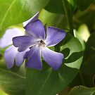 Home in Periwinkle - Garwood by Courtney Robison