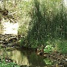 Equisetum at the creek - Clarksville, TN by Courtney Robison